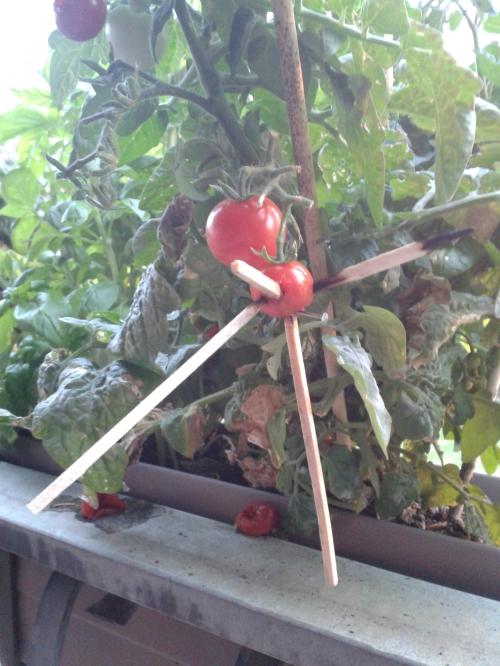 Tomaten-Voodoo_by Enno